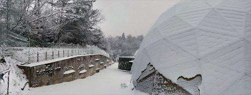 290115雪景色 (27)_R.jpg